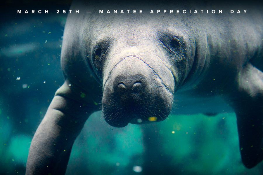 manatee appreciation day zoom rooms