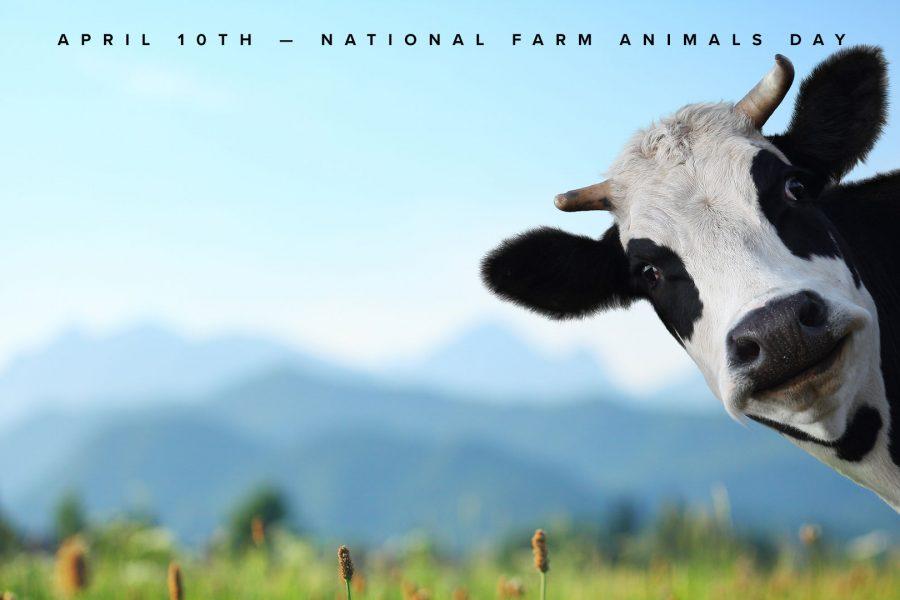 farm animal day zoom